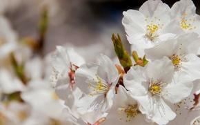 Picture macro, spring, petals