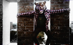 Picture Home, The city, Tiger, Watch, Posts, People, Windows, Evil, Roof, Guy, Shirt, Growls, Expensive, StrongeRazer