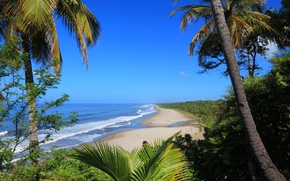 Picture sea, wave, palm trees, shrubs, tropic
