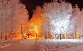 Picture winter, snow, night, lights