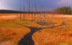 Picture the sky, stream, trees, grass, Yellowstone national Park, USA
