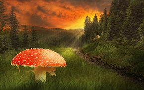 Picture grass, the sky, summer, path, wolves, trees, mushroom, clouds, red, forest, mushroom, the rays of …