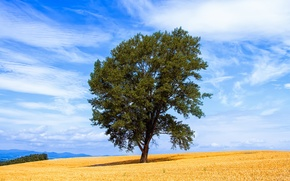 Picture field, summer, the sky, clouds, tree