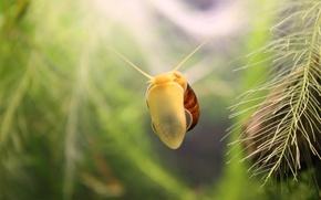 Wallpaper algae, aquarium, snail
