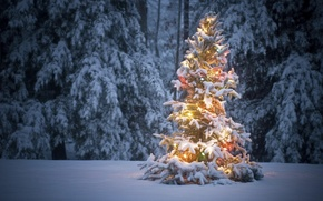 Picture winter, forest, snow, tree, garland