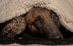 Picture owl, bird, dog, friends