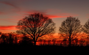 Picture twilight, trees, sunset, dusk, branches, silhouettes
