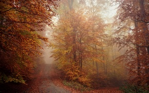 Wallpaper morning, nature, fog, road, autumn, forest