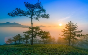 Picture the sun, mountains, fog, dawn, morning, pine
