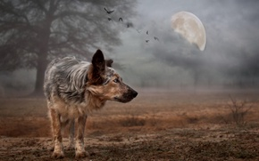 Picture background, the moon, dog