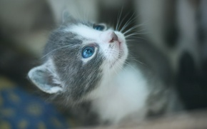 Picture kitty, eyes, muzzle, cutie, gray