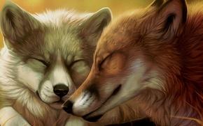 Picture pair, Fox, faces