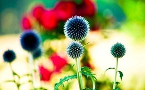 Wallpaper flowers, widescreen, blur, HD wallpapers, Wallpaper, leaves, full screen, background, fullscreen, widescreen, background, widescreen, bokeh, ...