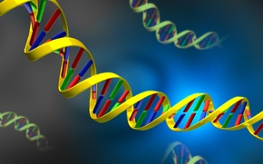 Wallpaper acid, DNA, DNA, nucleic