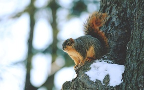 Picture snow, tree, animal, protein