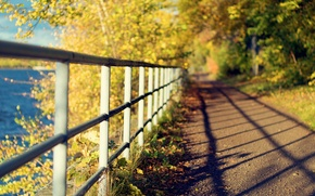 Picture leaves, macro, trees, nature, background, widescreen, Wallpaper, foliage, the fence, shadow, fence, the fence, day, ...