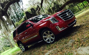 Picture forest, Cadillac, Escalade, 2015