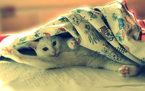Picture eyes, look, white, bed, Cat, lies, the trick, have adiala