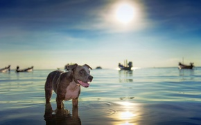 Picture sea, look, each, dog