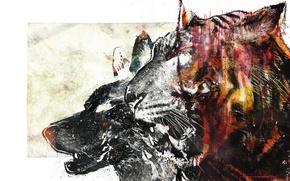 Picture tiger, wolf, vhm-alex, bloodbeat