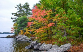 Picture autumn, forest, trees, lake, stones