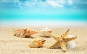 Picture sand, sea, wave, beach, shore, shell, summer, beach, sea, blue, sand, starfish, seashells