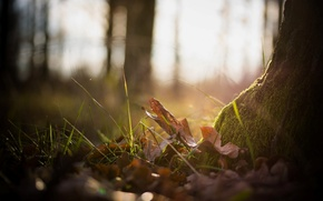Picture autumn, forest, grass, leaves, macro, nature, photo, background, tree, Wallpaper, moss, plants, wallpapers
