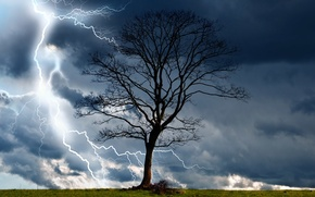 Picture the storm, clouds, nature, tree, lightning