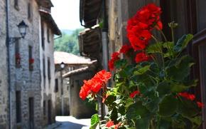Picture street, Spain, geranium