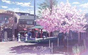 Picture clouds, street, home, shadow, Sakura, lights, Japan, flowering