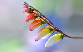 Wallpaper nature, petals, flower, plant