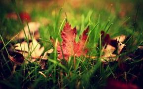 Picture greens, autumn, grass, leaves, drops, macro, sheet, droplets, blur