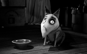 Picture cartoon, dog, bowl, Frankenweenie, FRANKENWEENIE