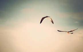 Picture birds, flight, background, nature, photo, the sky, Wallpaper