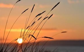 Picture Sun, sunset, lake, vegetation
