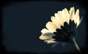 Wallpaper macro, black and white, background, Wallpaper, flower, petals, plant, photo
