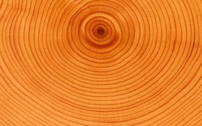 Picture Tree, Circles, Age