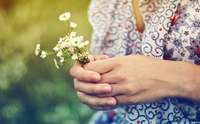 Picture summer, girl, the sun, light, flowers, mood, color, chamomile, plants, hands, jacket