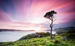 Picture greens, summer, grass, water, trees, landscape, sunset, nature, stones, tree, valley, Scotland, UK, twilight, Scotland, …