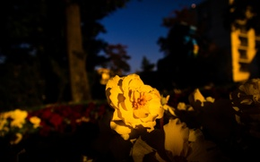 Picture Flower, Park, Autumn, Yellow, Evening, Killesberg