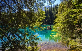 Wallpaper forest, trees, mountains, branches, lake, stones, Italy, Lake Carezza