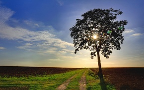 Picture road, field, tree, Nature