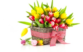 Picture Bow, Tulips, photo, Basket, Flowers, A lot