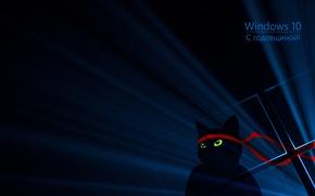 Picture cat, ninja, windows 10, anniversary