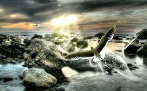 Wallpaper dream, rays, flight, overcast, dream, bird