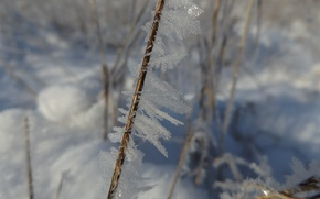 Picture winter, crystal, snow, nature