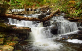 Picture forest, trees, river, stones, waterfall, stream, thresholds