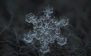 Picture winter, macro, snow, fiber, snowflake