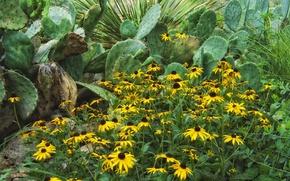 Picture flowers, petals, garden, cactus, flowerbed