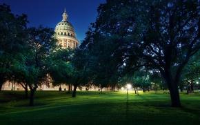 Wallpaper trees, Capitol, Austin
